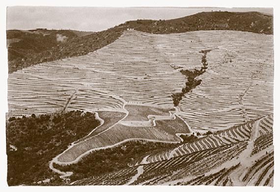 Novas vinhas no Douro, 2008