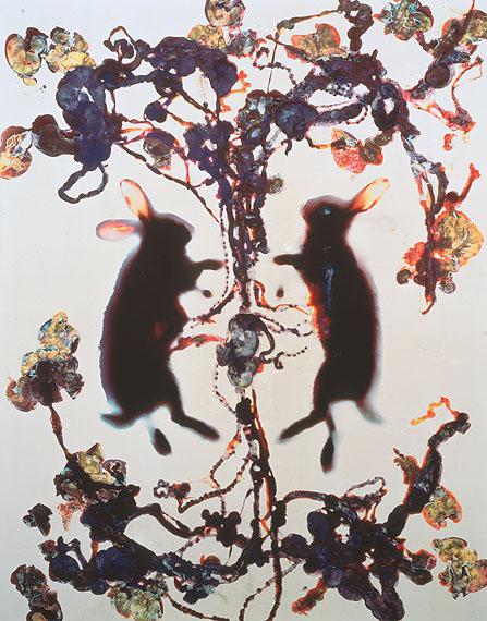 Love, 1993,Cibachrome photogram,124.5 x 98.4 cm,Unique piece,Courtesy Cheim & Read, New York  © Adam Fuss