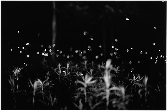 Fireflies 018, Fireflies series (1996) © Gregory Crewdson
