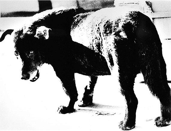 Daido Moriyama: Misawa (Stray Dog), 1971 © Daido Moriyama, courtesy Galerie Priska Pasquer, Cologne