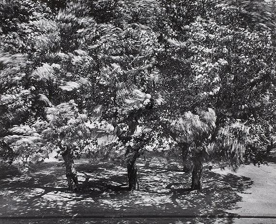 Lot 78Otto SteinertDie Bäume vor meinem Fenster II. 1956Vintage gelatin silver print. 49,5 x 61 cmEstimate € 12 000,-