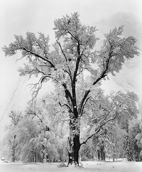Ansel Adams GalleryAnsel Adams, Oak Tree, Snow Storm, 1948
