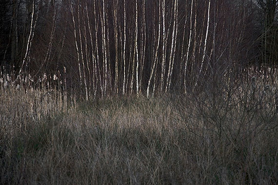 Winterwald #2, 2007, Fine Art Pigment Print, 45 x 60 cm, © the artist