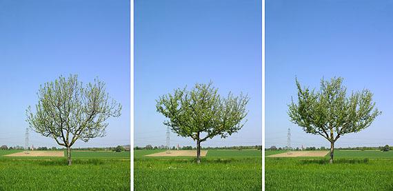 Bernhard J. Widmann,  ALLEEN, o.T., Halballee mit 53 Apfelbäumen, seit 2002, Inkjet auf Aludibond, je 70 x 50 cm, Aufl. je 5 + 2 e.a., © Bernhard J. Widmann