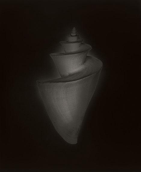Thatcheria mirabilis, Honshu, Japan © Christian von Alvensleben: Gelatin silver, handmade enlargement, Sabatier effect, selenium toned, 50 x 60 cm, limited edition of 2 prints + 1 AP