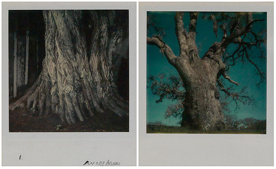lot 416: Ansel Adams, two Polaroids from a group of 4 color studies of trees, 1972-74.Estimate $5,000 to $7,500. © Ansel Adams Trust