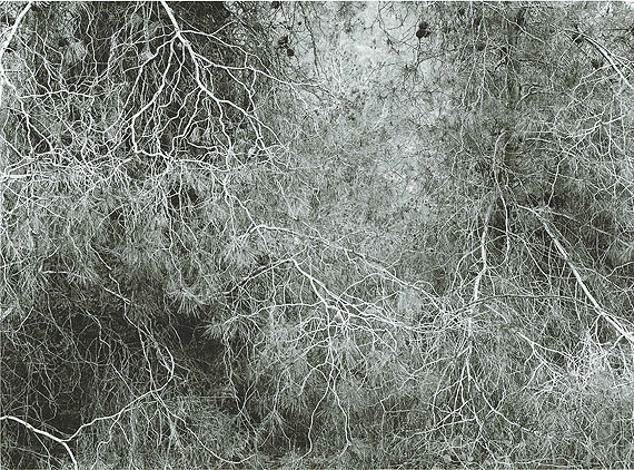 Efrat Shvily, 100 Years, 2012, Ink jet print, Courtesy of the Artist and Sommer Contemporary Art, Tel Aviv