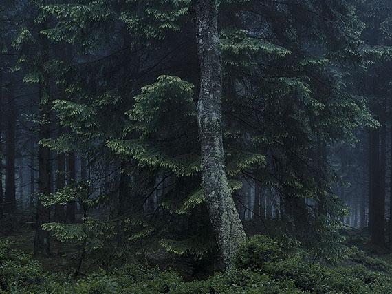 """Michael Lange in der Ausstellung """"Mythos Wald"""""""