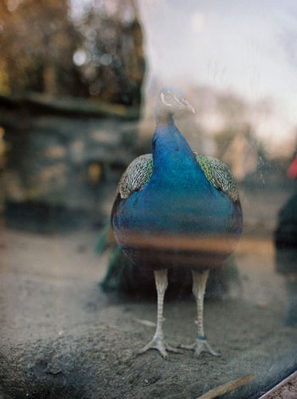 © Thekla Ehling, aus der Serie VERGISZMEINNICHT