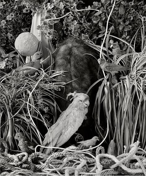 Hartmut NeumannDer Höhlenbrüter (Vogellandschaft)200980x66cmPigmentdruck auf Barytpapier© Hartmut Neumann / VG BildKunst, Bonn