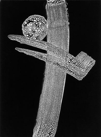 Heinz Hajek-Halke: Komposition 1512 b/bi © Sammlung Ruetz /Courtesy Johanna Breede PHOTOKUNST
