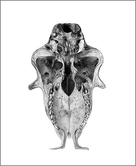 Constanze Kratzsch: Cranium Anima, 2012