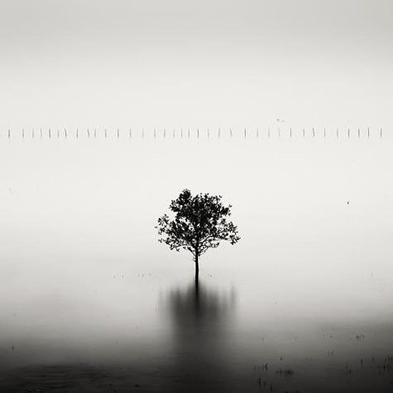 Mangrove Tree, Vietnam, 2007© Josef Hoflehner