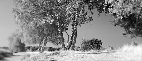 "Mark Wohlrab, ""Westruper Heide"", Haltern, 2008; 17,3 x 40 cm, Inkjetprint, Hahnemühle"
