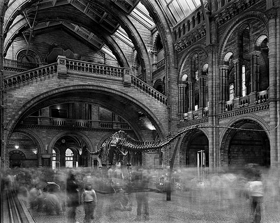 Wyoming Diplodocus. Natural History Museum, London 2007, © Matthew Pillsbury