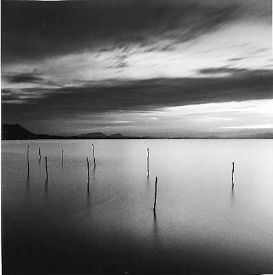 Sticks in Water, Shinji Lake, Honshu, Japan. 2001