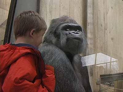 DeAnna Maganias . The Ape House, 2003 Video Installation (Still)