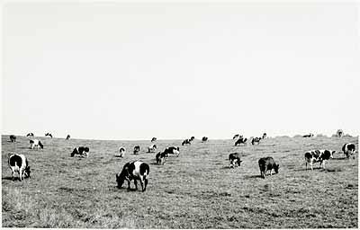 Klein-Waabs (Schleswig-Flensburg), Juli 1978 (aus der Serie Agrarlandschaften, 1976-1979), Silbergelatineabzug © Heinrich Riebesehl