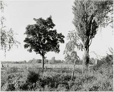 Wilkenburg, September 1992 (aus der Serie Landschaften, 1992), Silbergelatineabzug © Heinrich Riebesehl