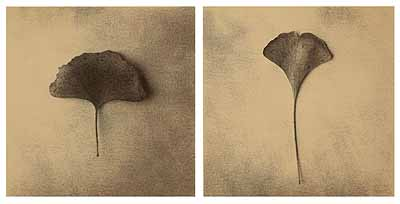 Ginkgo Leaf Diptych (Rethinking the Natural), 2002, Photographie (Iris Print), Ed. 2/25, je 53 x 53 cm (Papiermaß) / 95 x 125 x 5,1 cm (Rahmenmaß) © Thomas Brummett