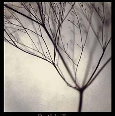 Ruth's Tree, 2002, Photographie (Iris Print), Ed. 10/50, 77 x 76 cm (Papiermaß) / 125 x 95 x 5,1 cm (Rahmenmaß) © Thomas Brummett