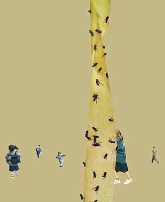 Flies, 2002