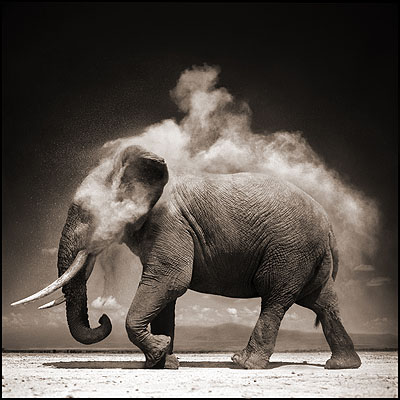 Elephant With Exploding Dust, Amboseli 2004 Archival Pigment Ink Print 100 x 120 cm (40 x 48 inches) Edition 8/8 (Last One)