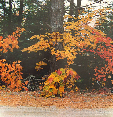 William WegmanUntitled (Man Ray), 1981dye transfer photograph23 x 20 1/2 inches58.4 x 52.1 cm