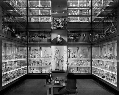 Huntarian Museum, Crystal Palace, London 2007© Matthew Pillsbury