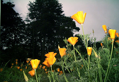 Flowers(#SF13.062), 2005 © Tony Mendoza, Courtesy of the Stephen Cohen Gallery.