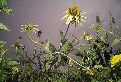 Flowers(#33.067), 2005 © Tony Mendoza, Courtesy of the Stephen Cohen Gallery.