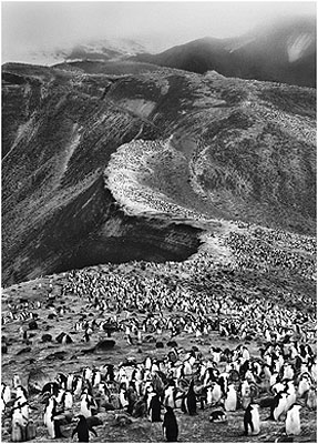Chinstrap penguin colony, Antarctica 2005© Sebastião Salgado/Amazonas/NB Pictures
