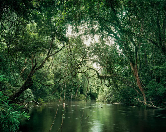 Olaf Otto Becker: Primary Forest 12, Waterway Malaysia, 11/2013