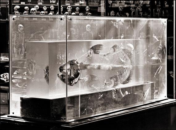 Matthias Holländer: Galerie d'Anatomie Comparée Paris 11, Quastenflosser, Fine Arte Print, 1996/2007