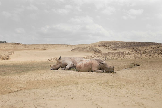 Rhinoceros with no horns, from the series A Guide to the Flora and Fauna of the world © Robert Zhao Renhui/East Wing