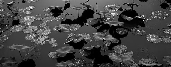 Waterdrop Lotus, West Lake, Hangzhou (1998) Platinum palladium print © Lois Conner / M97 Gallery