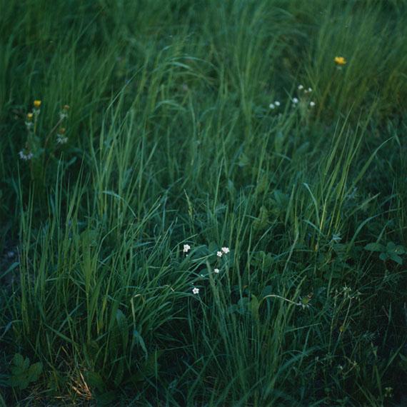 """© Anne Schwalbe, """"Wiese VII"""", 2011"""