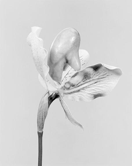 Robert VoitCypripedium calceolus, gelber Frauenschuh, 2014 © Robert Voit, courtesy Galerie Robert Morat
