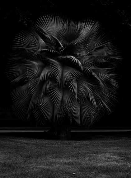 TROPE, 2013 © Geert Goiris