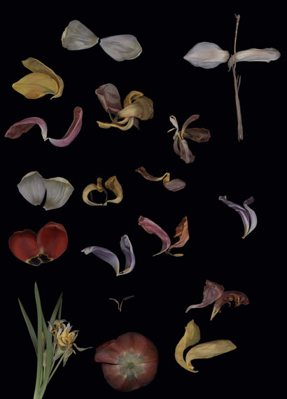 Luzia Simons: Blacklist Nr. 4, 2015, Scannogramm, Pigmentprint auf Harman by Hahnemühle Gloss Art Fibre, je 40 x 29 cm, Ed. 6