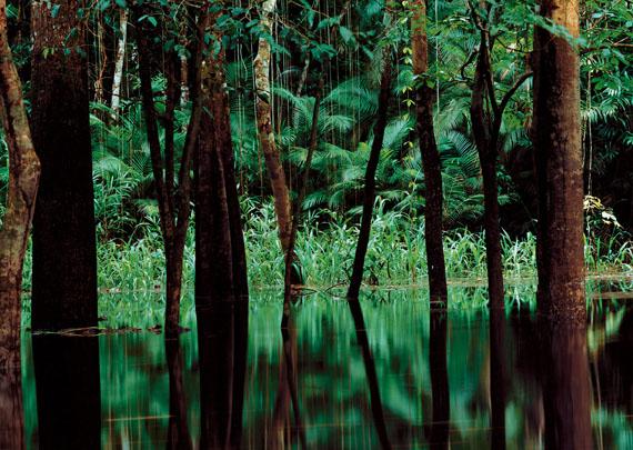 Axel Hütte: Rio Negro II, Brasilien, 1998