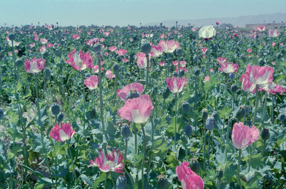 Poppy – Trails of Afghan Heroin