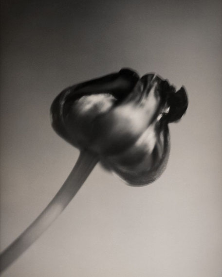 "© Silke Lauffs: ""Tulip, Berlin, March 2001"""