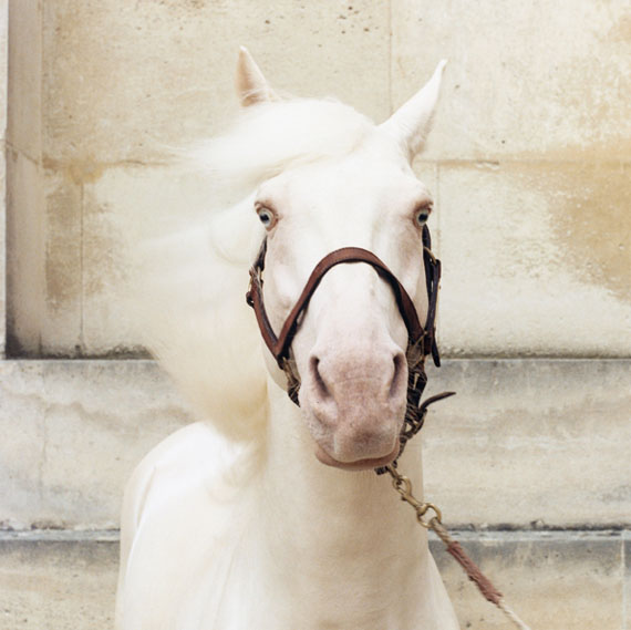 "Rejoneo © Sophie Hatier, Marilyn / Courtesy of the ""Académie Equestre de Versailles"" by Bartabas"