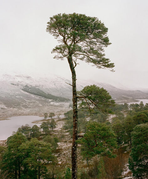 Boreal Tree 23, Scotland, from the series Borealis, 2017 © Jeroen Toirkens/Kahmann Gallery