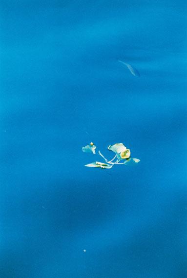 Frank Mädler, Fisch in Blau, 2016, analogue C-Print, mounted, framed, 177.5 x 119 cm, Ed. 4© Frank Mädler
