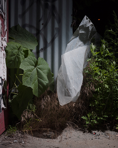 Michael Vahrenwald, Untitled #2, from the series Forest Floor, Brooklyn NY 2016