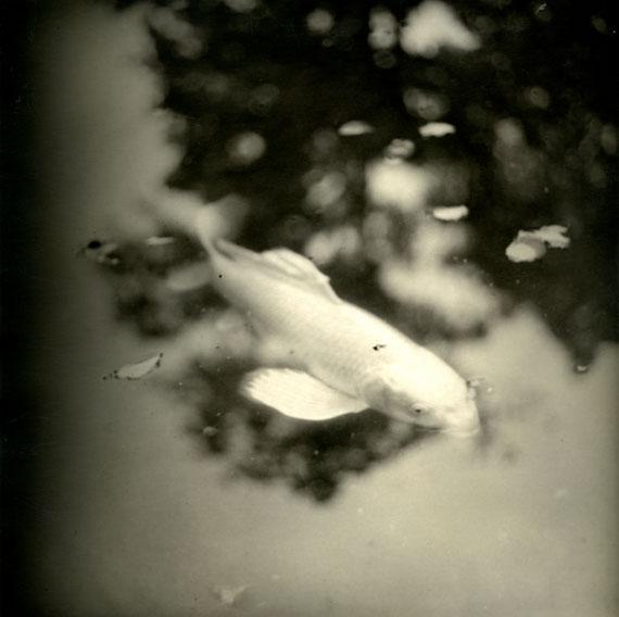 'Silver fish', LE JARDIN DE NORIKO 2019 © Isa Marcelli