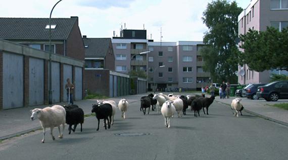 Aurelia MihaiTranshumanta, 2007Zweikanalige Videoinstallation, 16:9HD Video, Farbe, Ton, 13'32''Courtesy Galerie Anita Beckers, Frankfurt