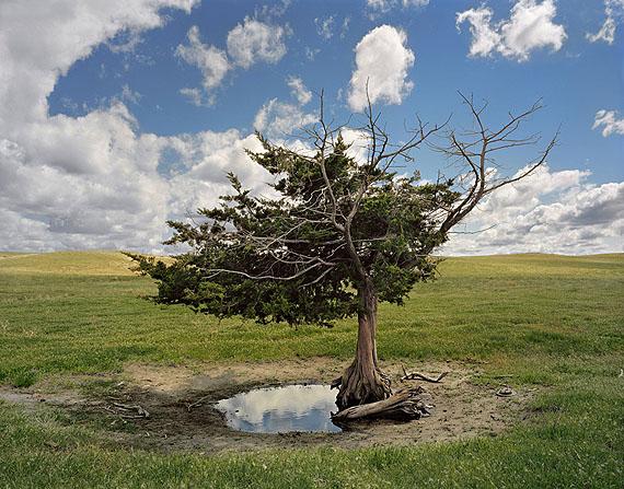 Andrew Moore: Homesteader´s Tree, Merriman, Nebraska, 2011